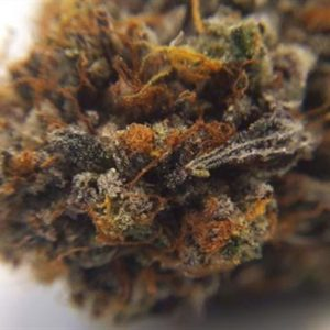 Buy Black Cherry Soda marijuana strain