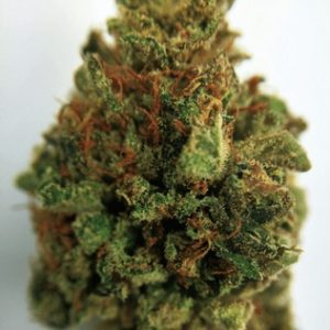 Atomic Jack Marijuana for sale online
