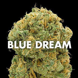 Blue Dream Marijuana for sale online